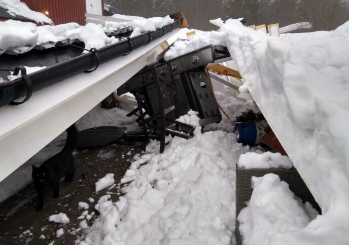 PINNEVED: Været bidro til ulykken, tror Per Gunvald Haugen. Foto: Privat